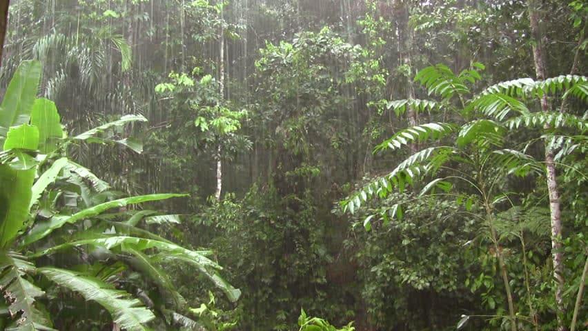 Theo dõi thiên nhiên và thời tiết